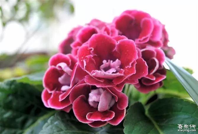 8种喜阴植物,北阳台的绿植首选!